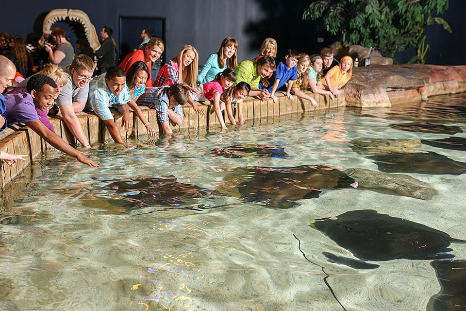 Touch a sting ray in a safe environment.