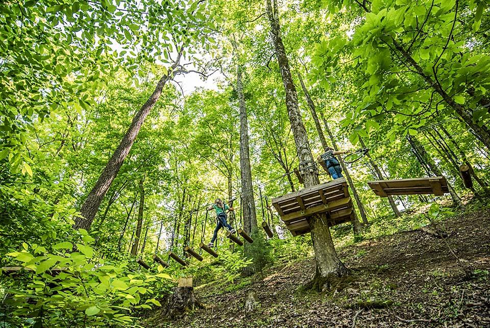Kids can safely climb and explore the tree tops.